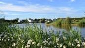 Walnut Lakes