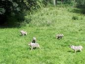 Animal Park of Courzieu