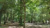 Accro des arbres