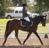 Ellenwood Equestrian Center
