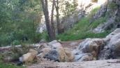 Paul Little Picnic Site